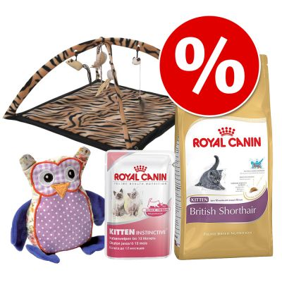 kitten breed british shorthair kitten paket. Black Bedroom Furniture Sets. Home Design Ideas
