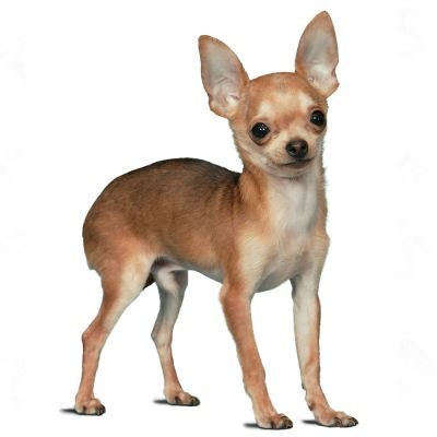 Royal Canin Chihuahua Dog Food Ingredients