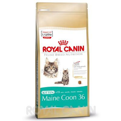 royal canin maine coon kitten great deals at zooplus. Black Bedroom Furniture Sets. Home Design Ideas