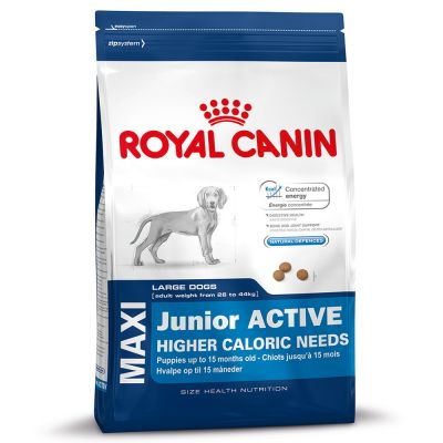 royal canin maxi junior active great deals at zooplus. Black Bedroom Furniture Sets. Home Design Ideas