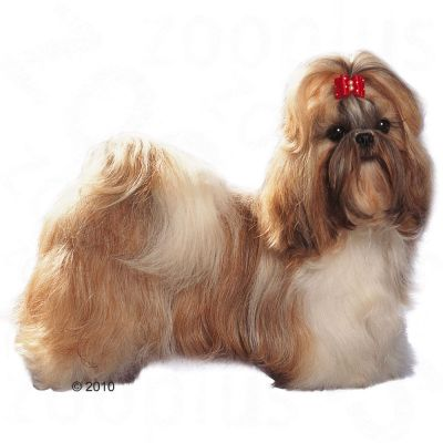 royal canin shih tzu adult free p p on orders 29 at zooplus. Black Bedroom Furniture Sets. Home Design Ideas