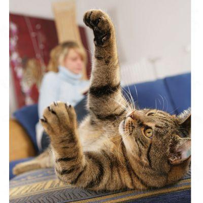 Sanabelle Kitten Kattenvoer