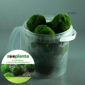 Set di piante per acquario zooplants 39 palline di muschio for Antialghe per acquario