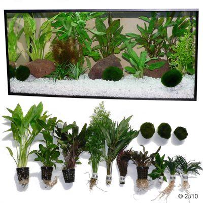 Set piante per acquario zooplants 39 assortimento misto for Piante da acquario
