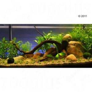 Set piante per acquario zooplants 39 oasi verde 39 zooplus for Antialghe per acquario