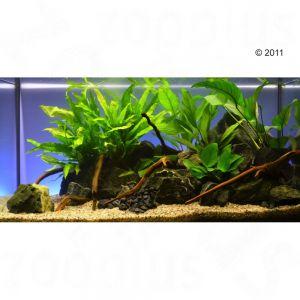 Set piante per acquario zooplants 39 persico 39 zooplus for Antialghe per acquario