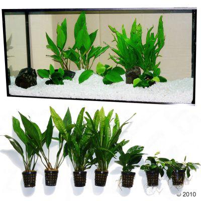 Set piante per acquario zooplants 39 persico 39 zooplus for Piante da acquario