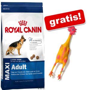 Velik paket Royal Canin + Gumijasti piščanec