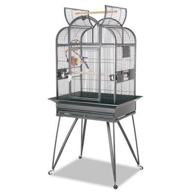vogelk fig montana brazil g nstig bei zooplus. Black Bedroom Furniture Sets. Home Design Ideas