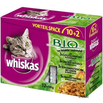 My Cat Really Loves Wet Food