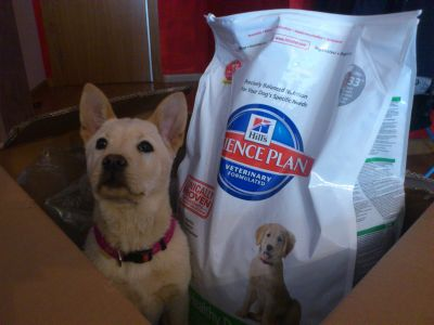 Hills Science Plan dog food