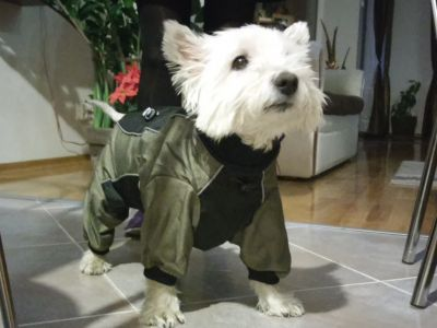 waterproof dog coats