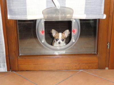 Ebay - Porta basculante per cani grandi con microchip ...