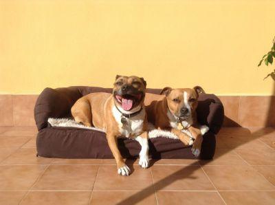orthopaedic dog beds