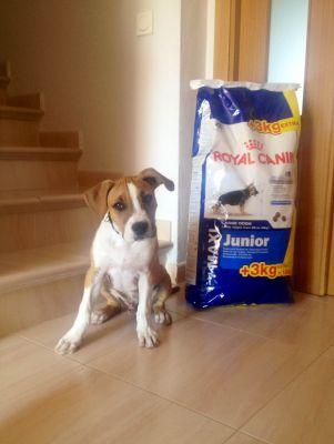 Royal Canin Size cibo per cani
