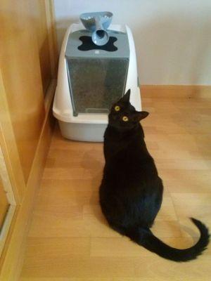 Caixas de areia e higiene para gatos