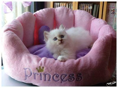 Shebalù nel suo lettino da vera principessa delle fiabe