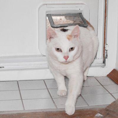 Gateiras e redes para gatos