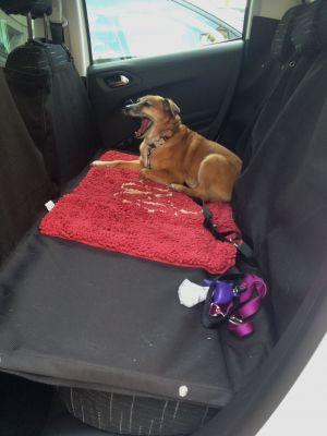 Ford Suv Truck Pet Dog Seat Back Cover Extender Platform