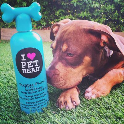 Saúde e higiene para cães