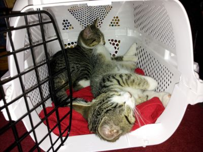 Katzenklappen