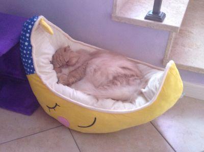 Cuccia cuscino per cani e gatti luna l 73 x p 41 x h 17 cm for Cuscino per cani fai da te