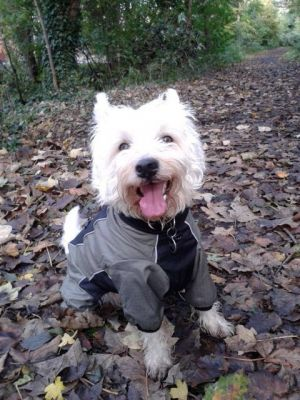 Dog Clothing & Dog Coats