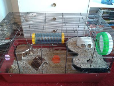 Is The Alaska Cage Suitable For 1 Syrian Hamster