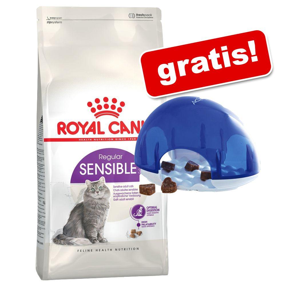 10 kg Royal Canin + Cat Activity Snack Box på köpet! - Indoor Long Hair