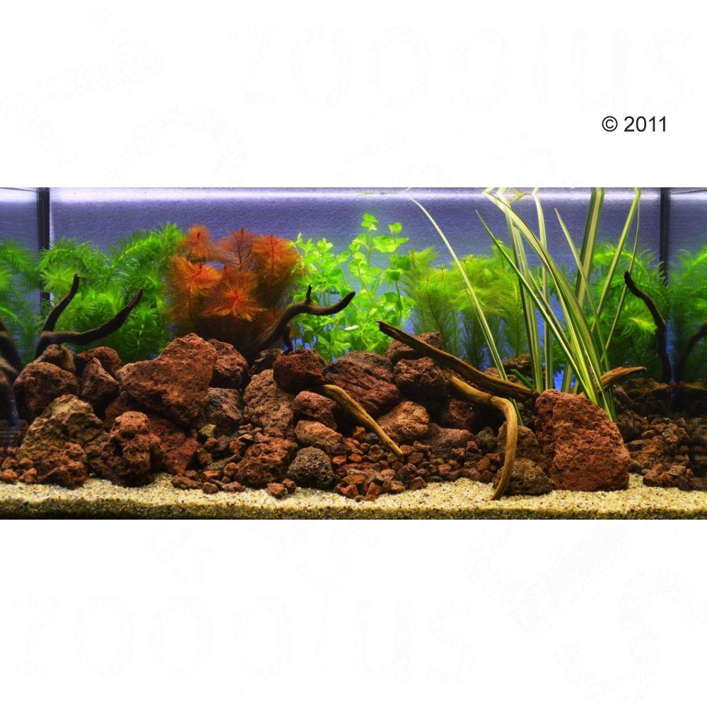 Foto Set di piante per acquario Zooplants Goldfish - 9 piante Speciale