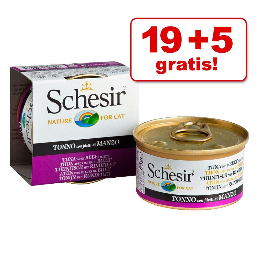 19 + 5 gratis! Schesir, 24 x 85 g - Kitten dla kociąt, tuńczyk z aloesem