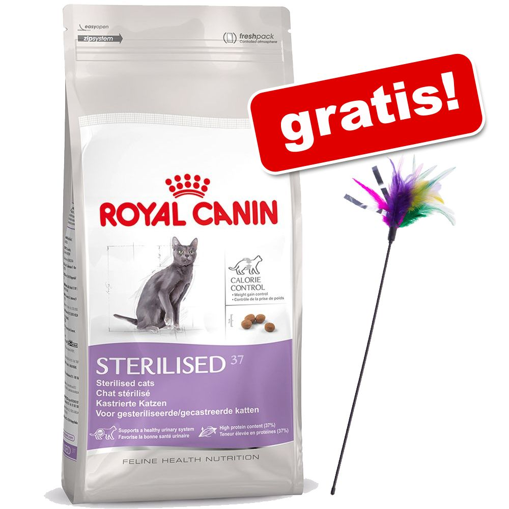 10 kg Royal Canin + Wędka dla kota z kolorowymi piórkami gratis! - Sphynx 33