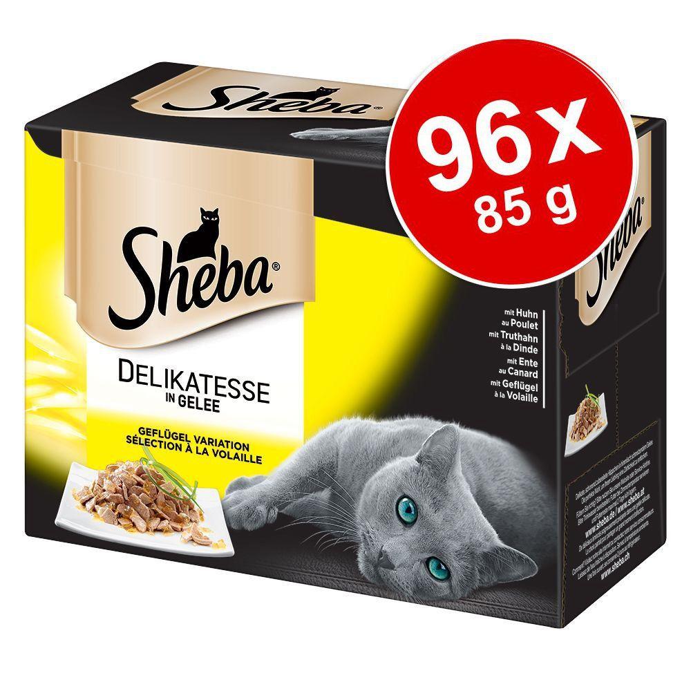Megapakiet Sheba Delicato