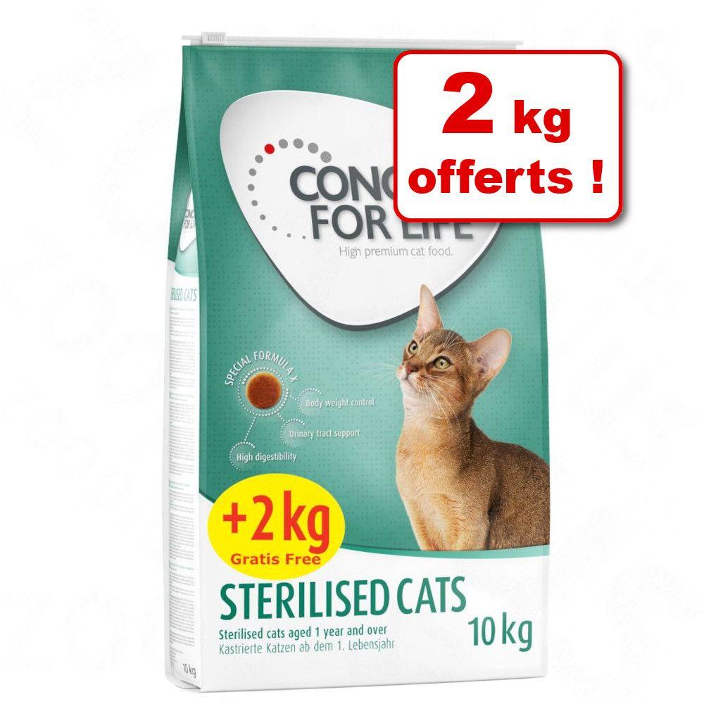 10kg Maine Coon Concept for Life - Croquettes pour chat