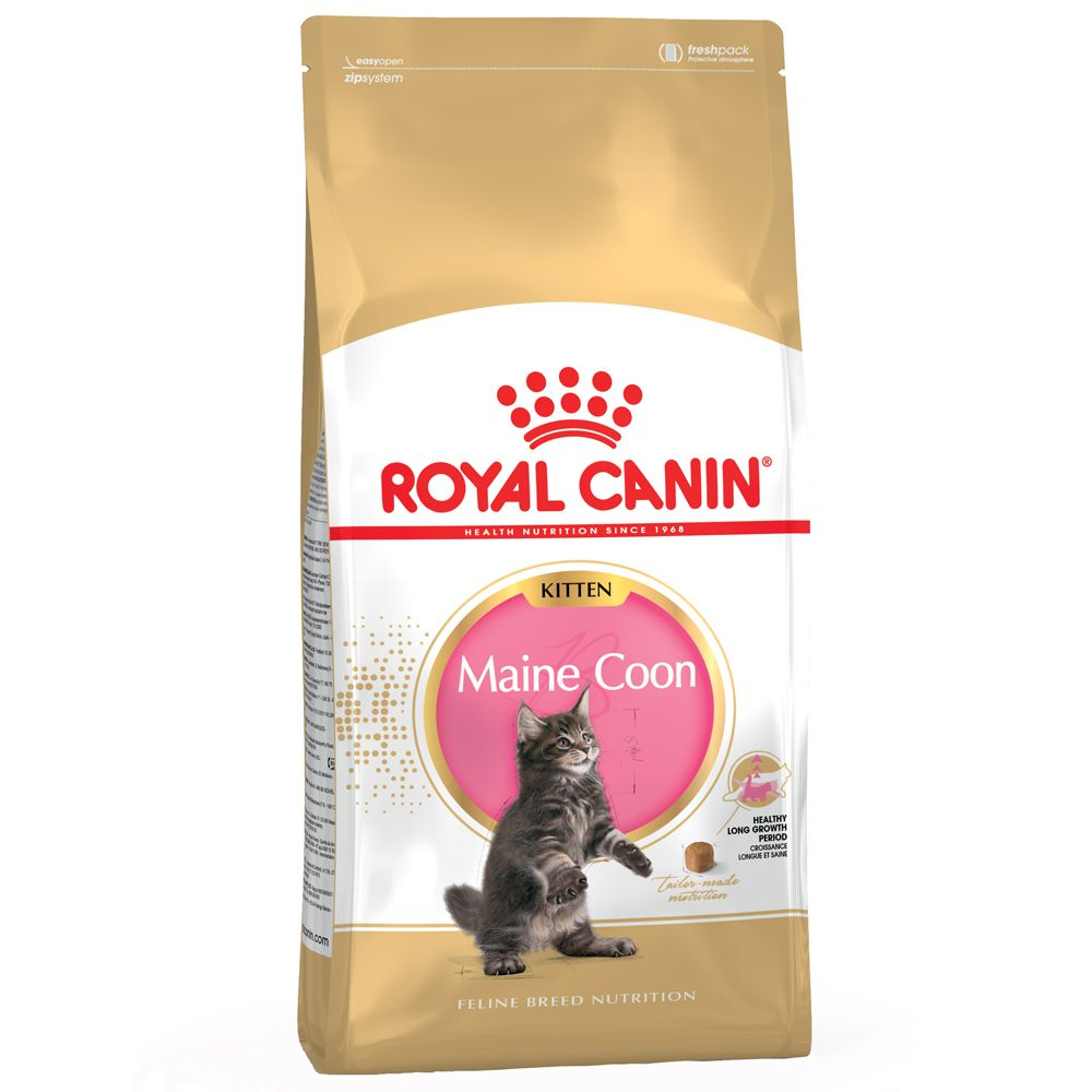 Maine Coon Kitten Royal Canin Dry Cat Food