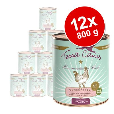 Terra Canis, viljaton -säästöpakkaus 12 x 800 g - mix: kalkkuna & nauta