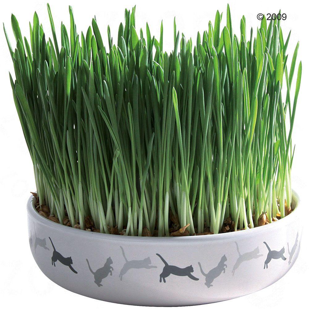 Trixie ceramiczna miska z trawą dla kota - Ø 15 x 4 cm + 50 g nasion trawy