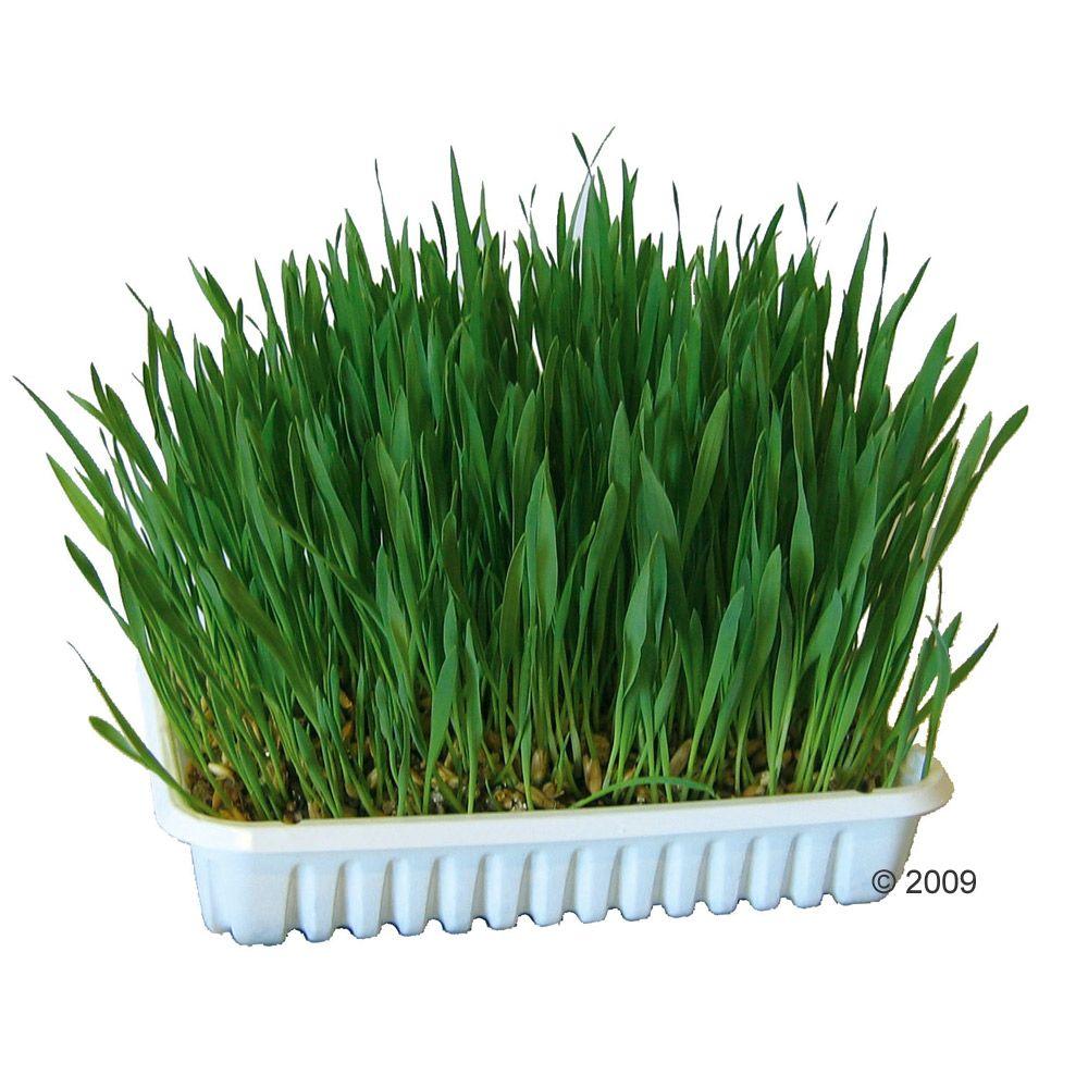 Trawa dla gryzoni - 100 g