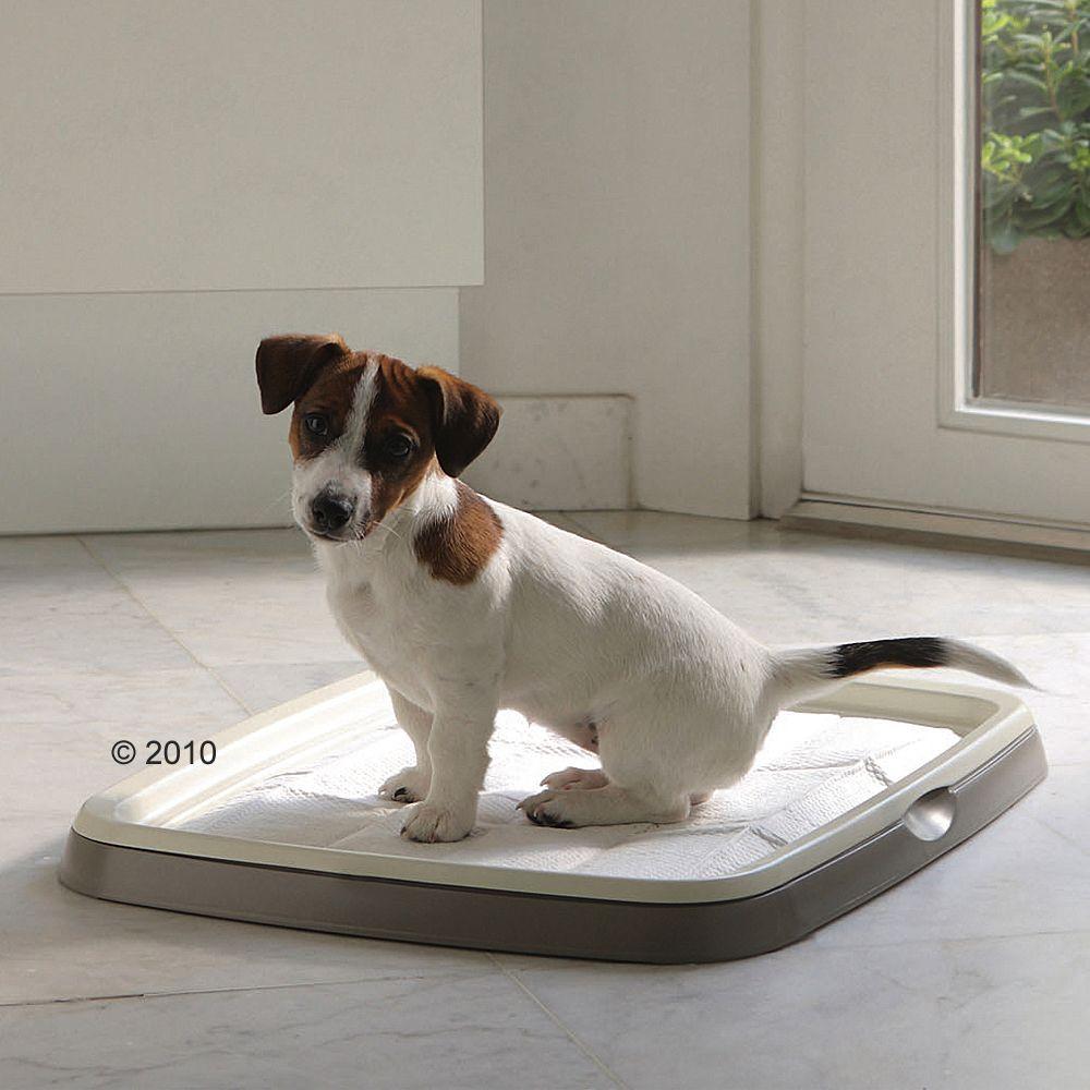 Foto Puppy Trainer Starter Set - Set XL + 30 tappetini - prezzo top! savic Tappetini & Pannolini