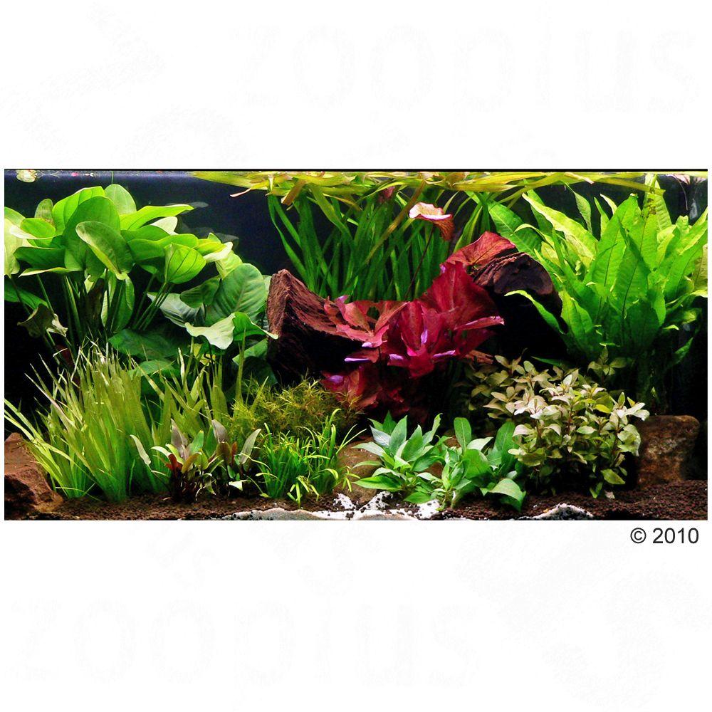 """Image of Set di piante per acquario Zooplants """"Teatro verde XXL"""" - 33 piante"""