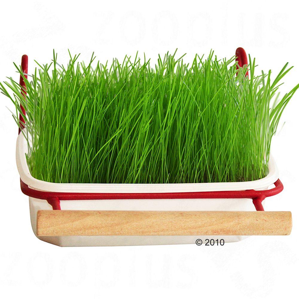 Mucki Barquette d´herbe verte pour oiseaux - recharge d´herbe