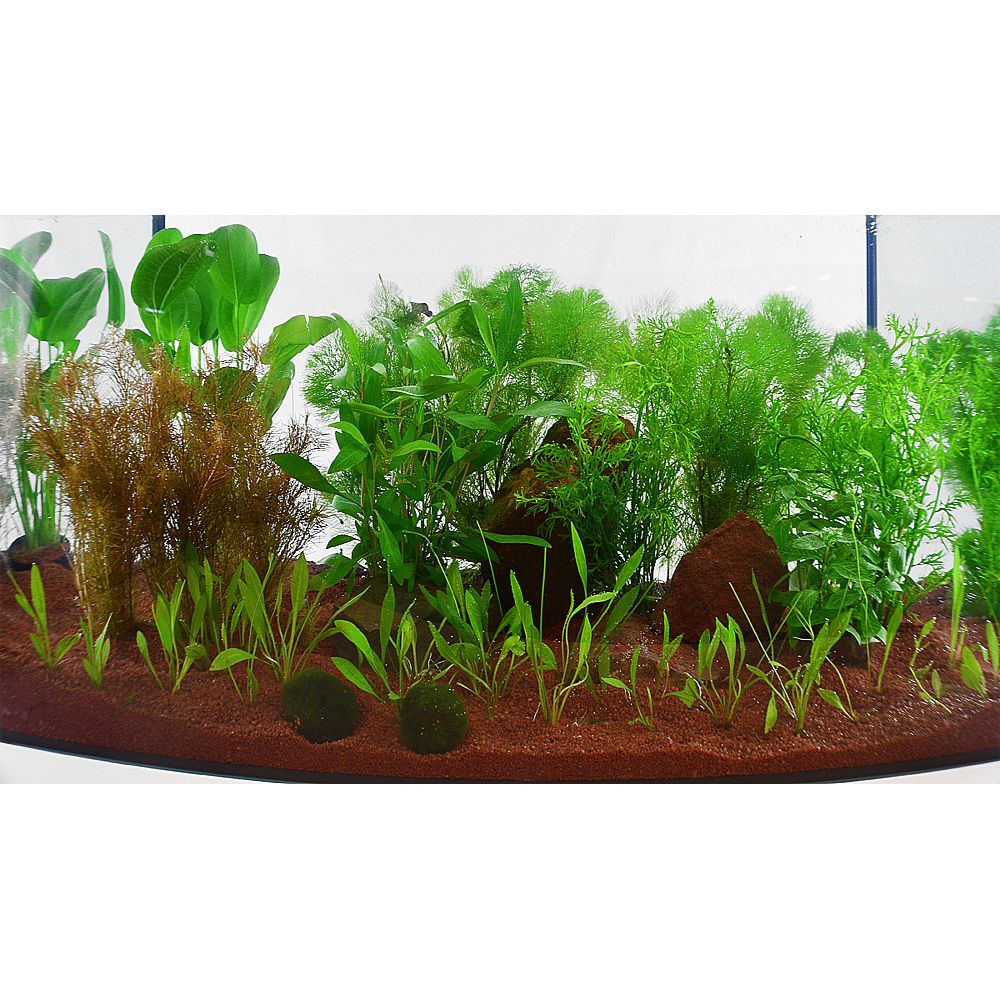 Aquarienpflanzen Zooplants ´´Guppy-Platy-Aquari...