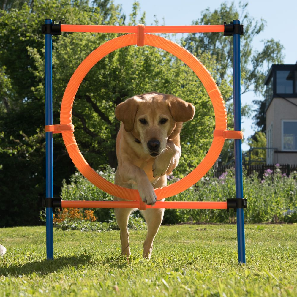 Fun & Sport Complete Dog Agility Course - 3 Agility Equipments