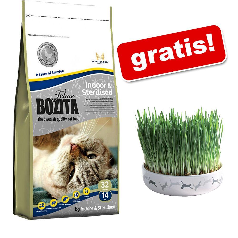 10 kg Bozita Feline + Trixie ceramiczna miska z trawą dla kota gratis! - Indoor & Sterilised
