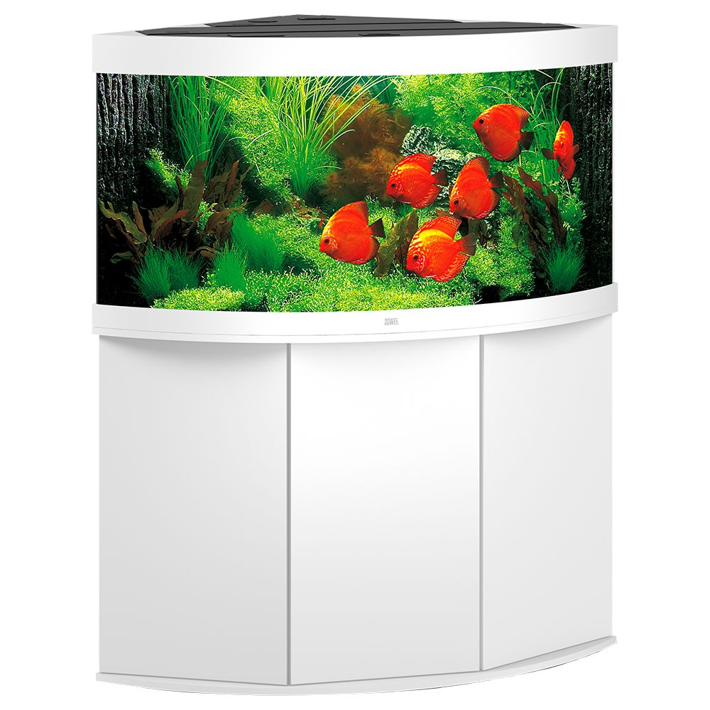 Poisson Aquarium Juwel Aquarium Juwel plus de 300 L