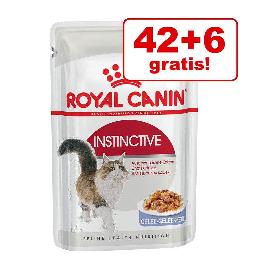42 + 6 på köpet! Royal Canin våtfoder 48 x 85 g - Intense Beauty i gelé
