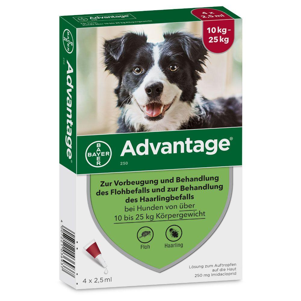 Advantage® 250 für Hunde - 250: 10-25 kg (4 Pipetten x 2,5 ml)