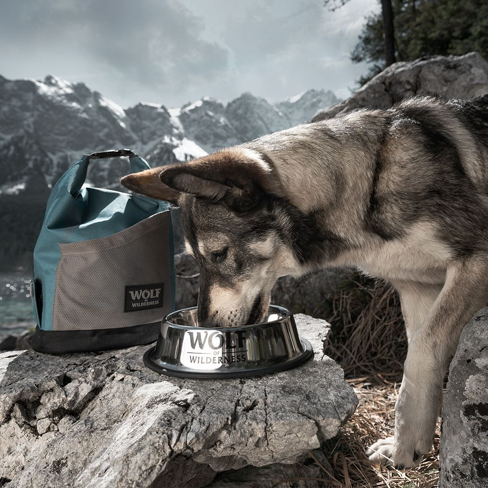 Det vilda lockar: Wolf of Wilderness rostfri hundskål till sparpris! - 850 ml, Ø 23 cm