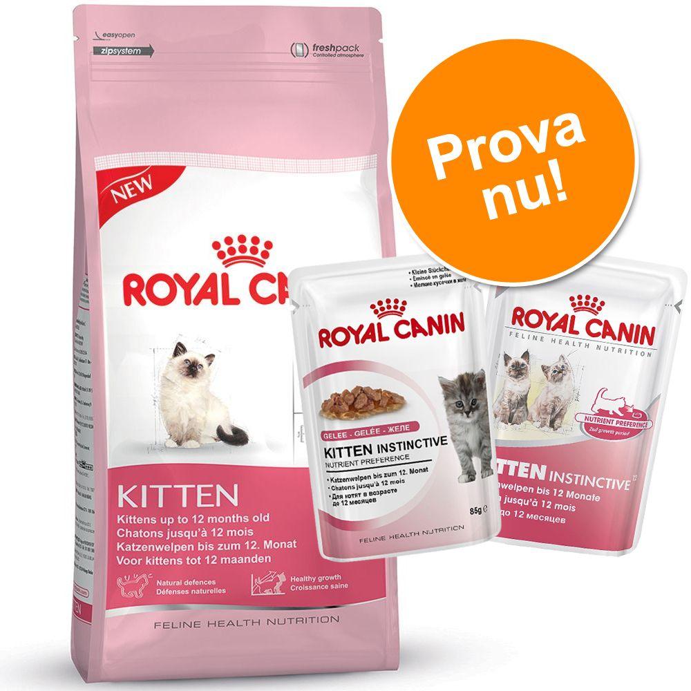 Blandat provpack: Royal Canin Kitten + 24 x 85 g våtfoder – Maine Coon Kitten (4 kg + 24 x 85 g våtfoder)