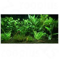 """Set di piante per acquario zooplants """"""""giardino eden"""""""" - - 12 piante."""